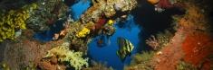 Alam Anda Dive Resort